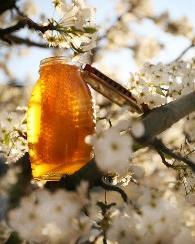 Honey harm