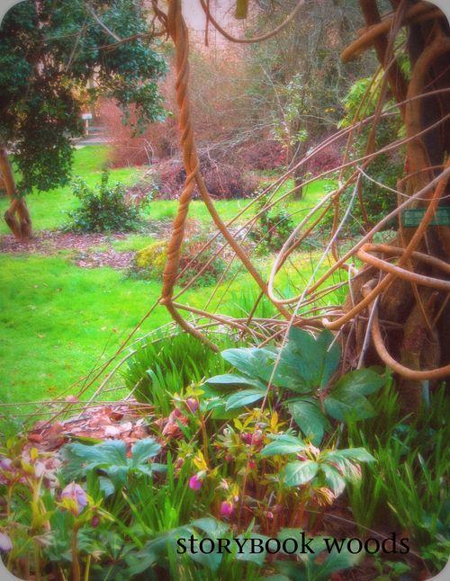 Angie garden2