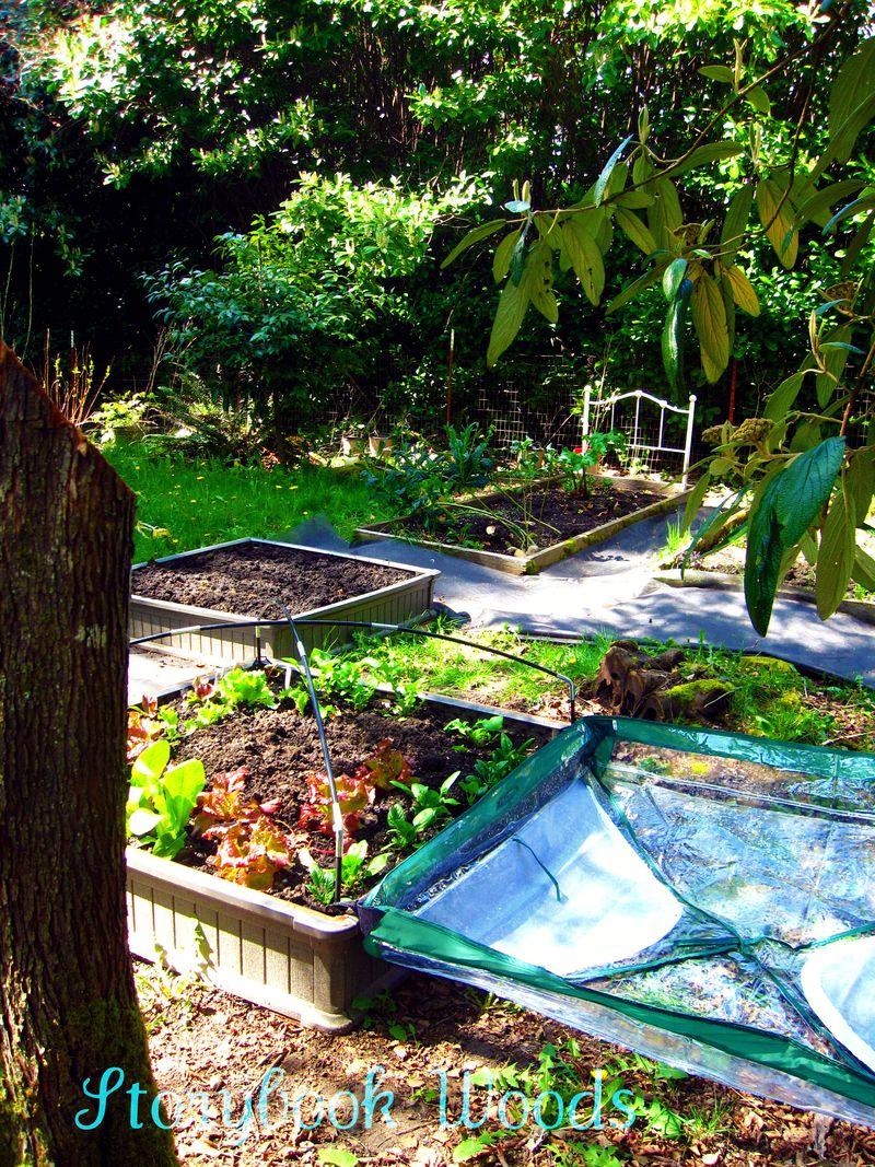 Spring garden 202