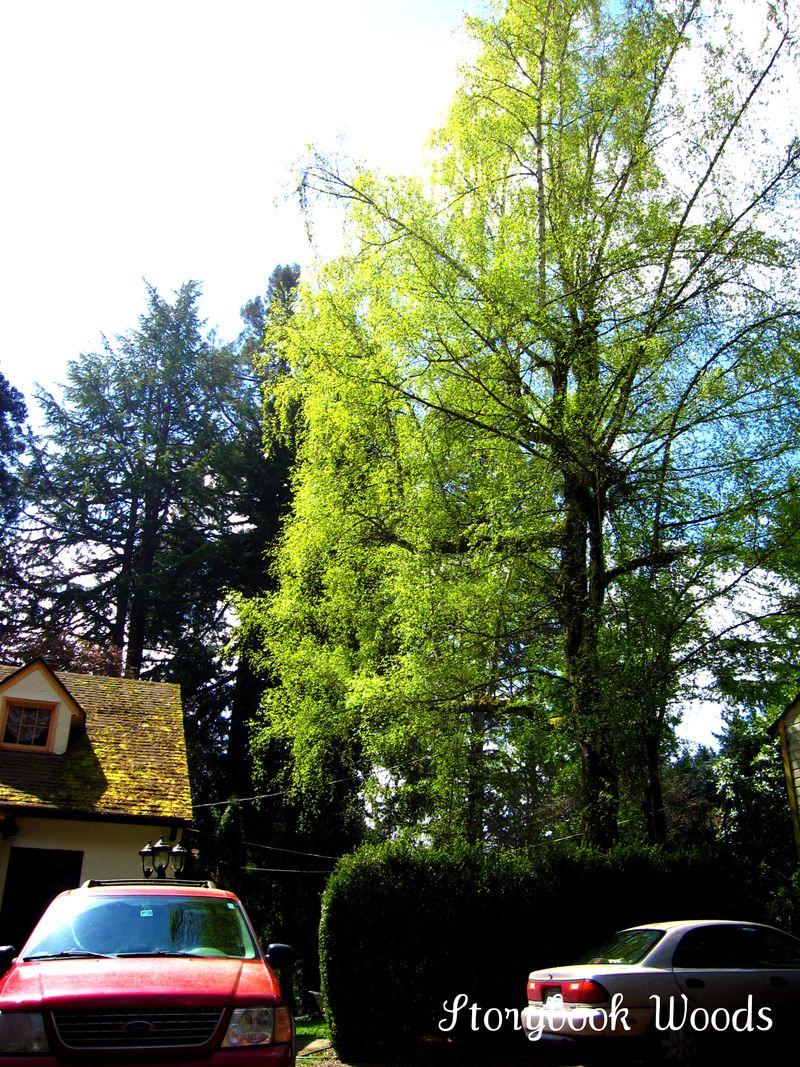 Spring garden 909