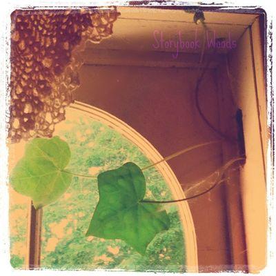 Ivy window 202