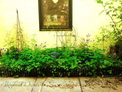 Sp garden1