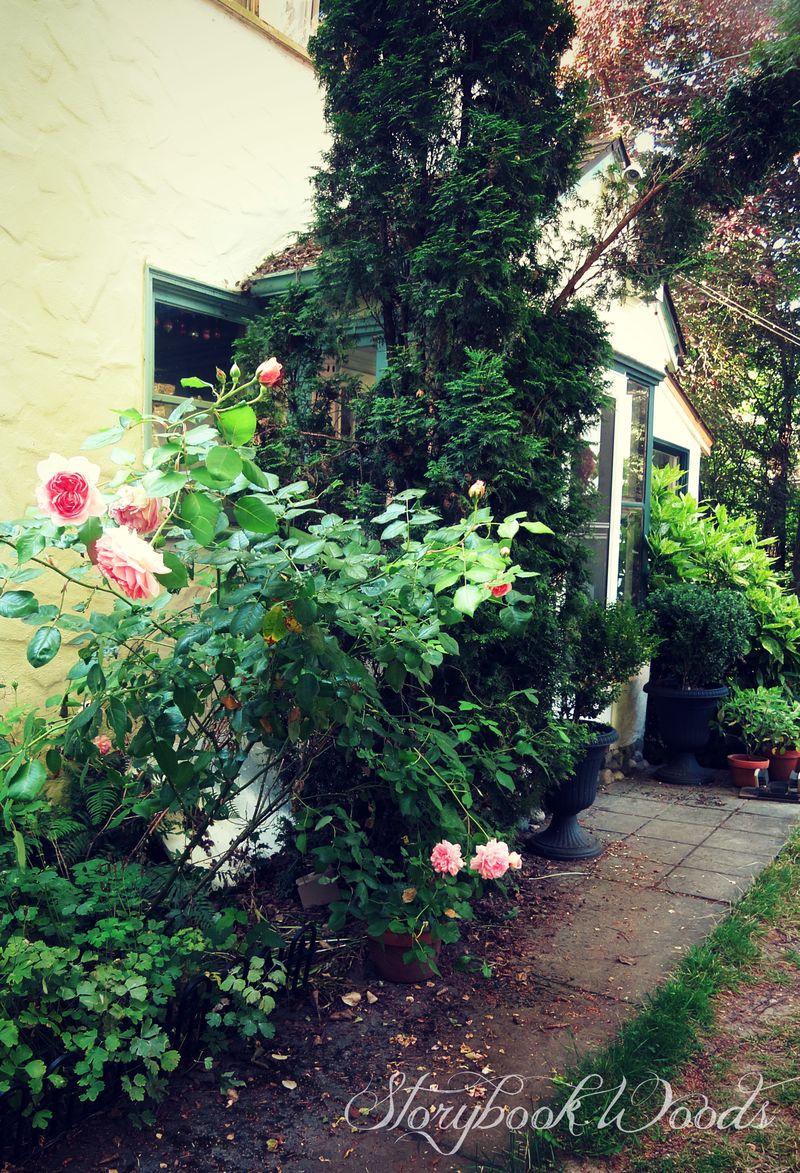 Rose path4
