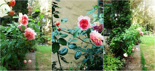 Rosepath1 Collage