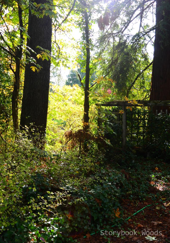 Fal16 Storybook Woods