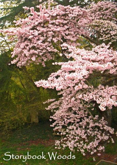 Tree_yard
