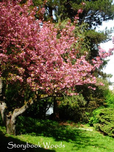 Tree_yard_4